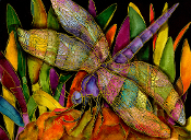 Dragonfly Revisited Giclee (4 Sizes available)