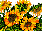 5 Sunflowers Giclee (4 Sizes available)