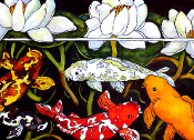 Koi Fish and waterlilies.