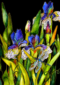 Iris and Dragonfly Giclee (4 Sizes available)