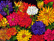 Dizzy Dahlias Giclees (4 Sizes available)