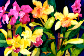 Tropical Orchids Giclee (3 Sizes available)