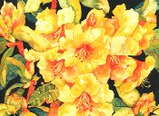 Golden Rhodies Art Tile