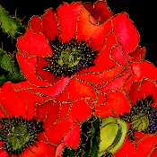 Bold red poppies with cobalt blue centers on a white background.