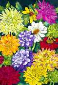Dahlia Bliss Giclee (4 Sizes available)