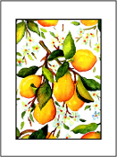 Summer Lemons (3 Sizes available)