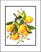 Lemon Branch Giclee (3 Sizes available)