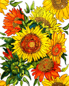 Glorious Sunflowers Art Tile