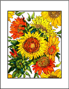 Glorious Sunflowers Giclee (4 Sizes available)